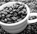 LICENSED CAFE - SYDNEY CBD - JM0623